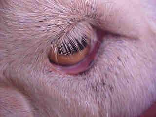 Good Eyes